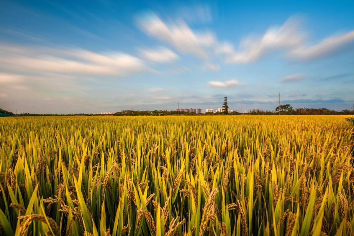 rice storage methods